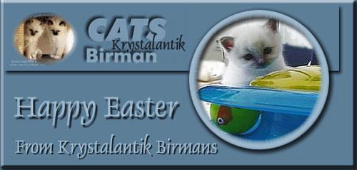 Krystalantik cats